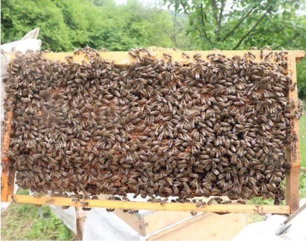 6 çerçeveli satılık paket arı
