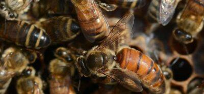 Ana Arı Gen Dilek ve Şikayet