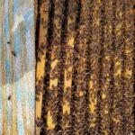 7 Çerçeveli Plastik Kutulu Arı