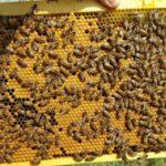9 Çerçeveli Plastik Kutulu Arı