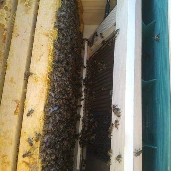 arı zehri aparatı 3