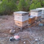 arı zehri aparatı 7