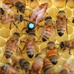 belfast ana arı 2021