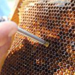 arı ekmeği aparatı metal 1