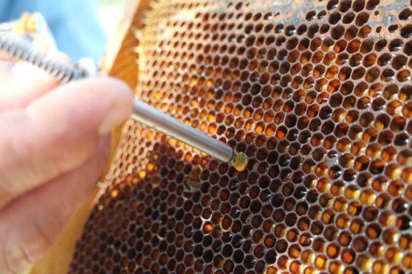 Arı Ekmeği Aparatı (Metal)