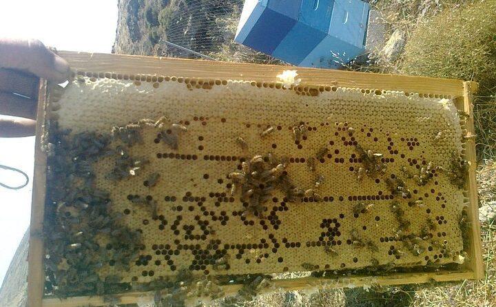 2021 arı satışı