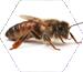 Ana Arı ve Malzemeleri