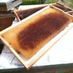 kabarmış petek arıların ördüğü
