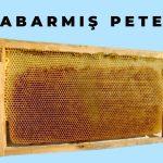 kabarmış petek arıların ördüğü 2
