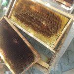 kabarmış petek arıların yaptığı 1