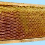 kabarmış petek arıların yaptığı 2