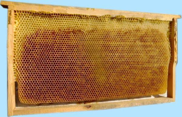 Kabarmış Petek (Arıların Yaptığı) 1 Adet