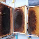 kabarmış petek arıların yaptığı 3