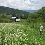 karabuğday tohumu 2