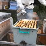paket arı taşıma kutusu 2