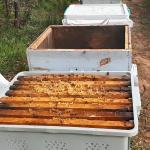 paket arı taşıma kutusu 3