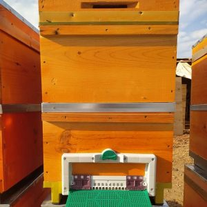 Arı Kovanı (Plastik Tabanlı Polen Tuzaklı) Çerçeveli