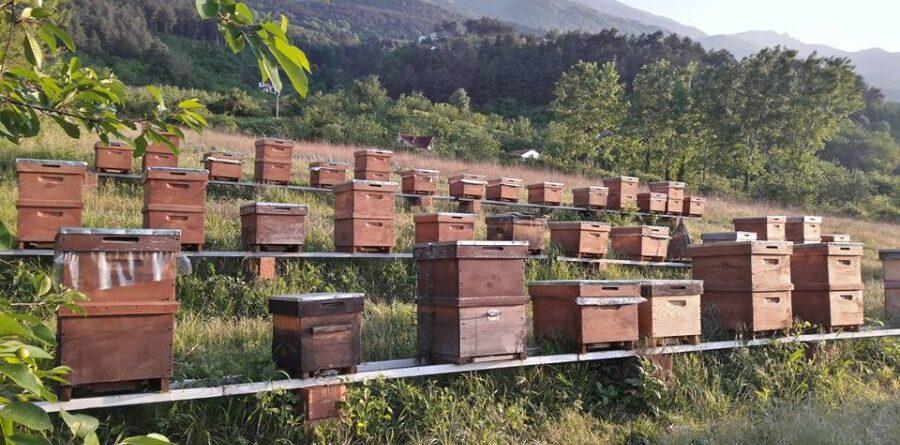50 Kovanlık Arıcılık Hibe Projesi Paketi