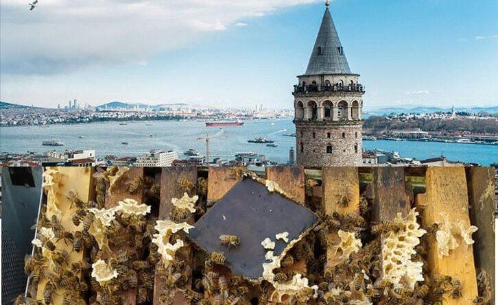 İstanbul Arıcılık