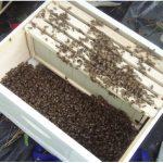 silkeleme paket arı 1