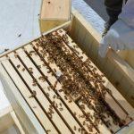 silkeleme paket arı 2
